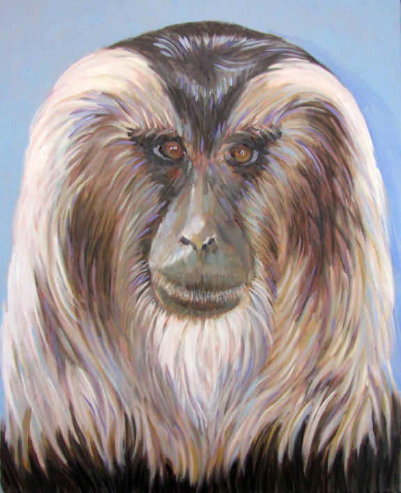G Lion Tailed Macaque