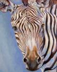 B Grevys Zebra