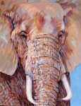 D Elephant