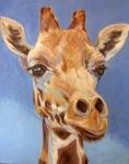 F Rothschild's Giraffe