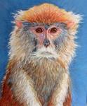 K Patas Monkey