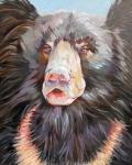 L Sloth Bear