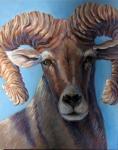 N Bighorn Sheep