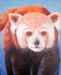 O Red Panda