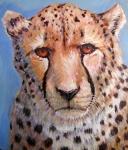 Q Cheetah