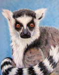 T Ring Tailed Lemur