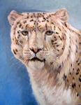 U Snow Leopard