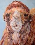 W Bactrian Camel